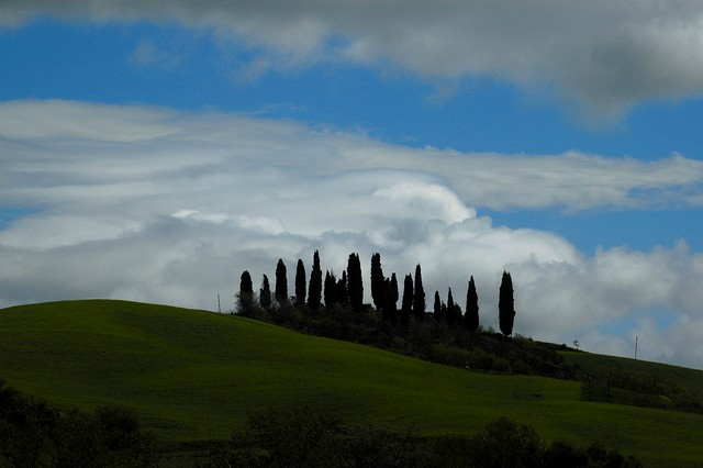 orcia_b