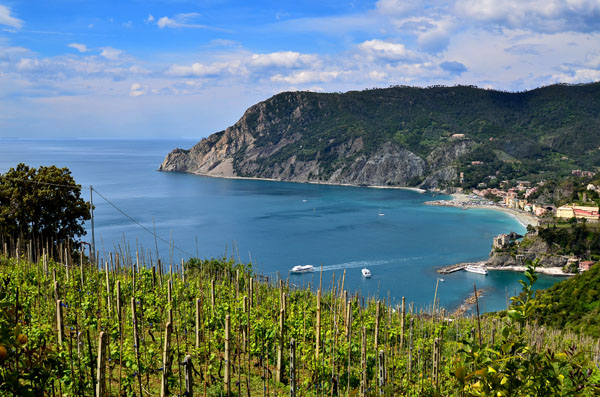 Les vignes de Monterosso