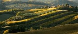 Chianti Classico, le vin du «coq noir»